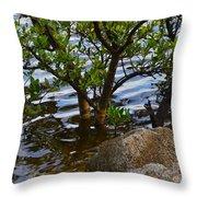 Mangroves And Coquina Throw Pillow