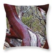 Manzanita Window Throw Pillow
