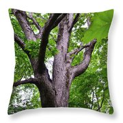 Maple Branches Throw Pillow