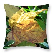 Maple Leaf Throw Pillow by Kathy DesJardins