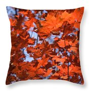 Maple Leaves Aglow Throw Pillow