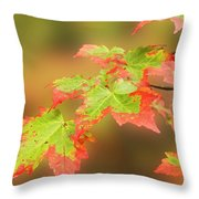 Maple Leaves Changing Throw Pillow