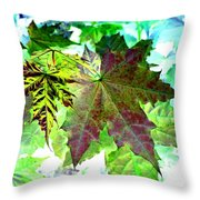 Maple Mania 24 Throw Pillow