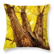 Maple Tree Portrait 2 Throw Pillow