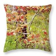 Maple Tree W C  Throw Pillow