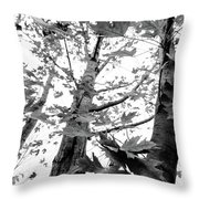 Maple Trees In Black And White Throw Pillow