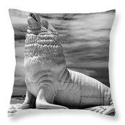 Mar Del Plata-05 Throw Pillow