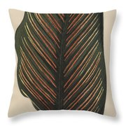 Maranta Regalis Throw Pillow