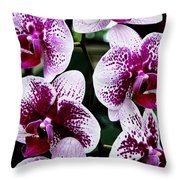 Marbled Harlequin Throw Pillow
