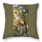 Marbled Orb Weaver Throw Pillow