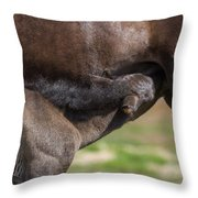 Mare And Foal, Icelandicelandic Throw Pillow