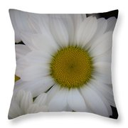 Marguerite Daisies Throw Pillow