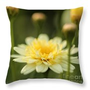 Marguerite Daisy Named Madeira Crested Primrose Throw Pillow
