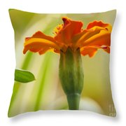 Marigold On A Lovely Spring Day Throw Pillow