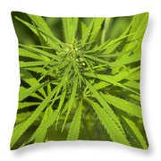 Marihuana Throw Pillow