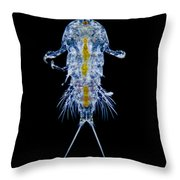 Marine Copepod, Lm Throw Pillow