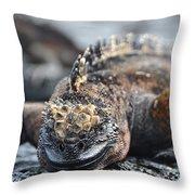 Marine Iguana  Throw Pillow