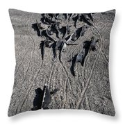 Galloping Iguanas Of Galapagos Throw Pillow