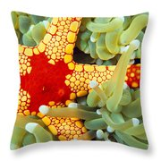 Marine Life, Close-up Throw Pillow