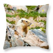 Marmot On Mount Massive Colorado Throw Pillow