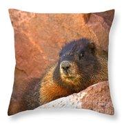 Marmot On The Rocks Throw Pillow