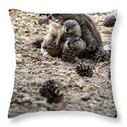 Marmot Stack Throw Pillow