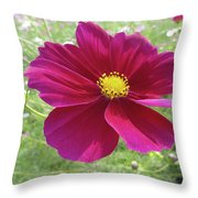 Maroon And Yellow Cosmos Throw Pillow