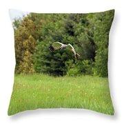 Marsh Hawk 2 Throw Pillow