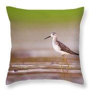 Marsh Sandpiper Tringa Stagnatilis Throw Pillow