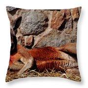 Marsupial Centerfold Throw Pillow by Lori Tambakis