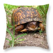 Maryland Box Turtle Throw Pillow