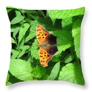 Maryland Eastern Comma Throw Pillow