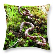 Maryland Milk Snakes Verticle Throw Pillow
