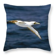 Masked Booby Throw Pillow