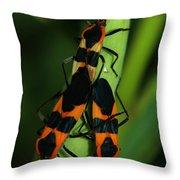 Mating Milkweed Bugs Throw Pillow
