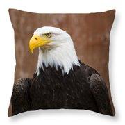Mature Adult Bald Eagle Throw Pillow