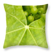 Maturing Wine Grapes Throw Pillow by Gaspar Avila