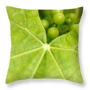 Maturing Wine Grapes Throw Pillow
