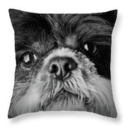 Max - A Shih Tzu Portrait Throw Pillow
