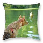 Max Examines The Catch Throw Pillow