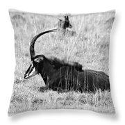 Mbarapi Throw Pillow