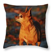 Mcgee Throw Pillow