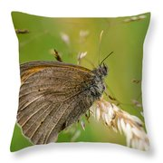Meadow Brown Throw Pillow