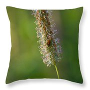 Meadow Foxtail Throw Pillow