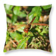 Meadowhawk Dragonfly Throw Pillow