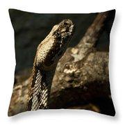 Mean Poisonous Snake Throw Pillow
