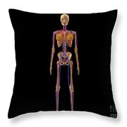 Medical Illustration Of Female Skeleton Throw Pillow