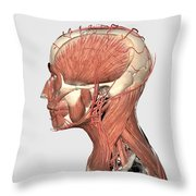 Medical Illustration Showing Human Head Throw Pillow