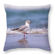 Mediterranean Gull Ichthyaetus Melanocephalus Throw Pillow