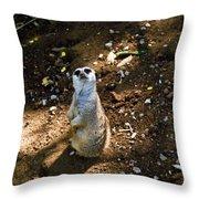 Meerkat     Say What Throw Pillow